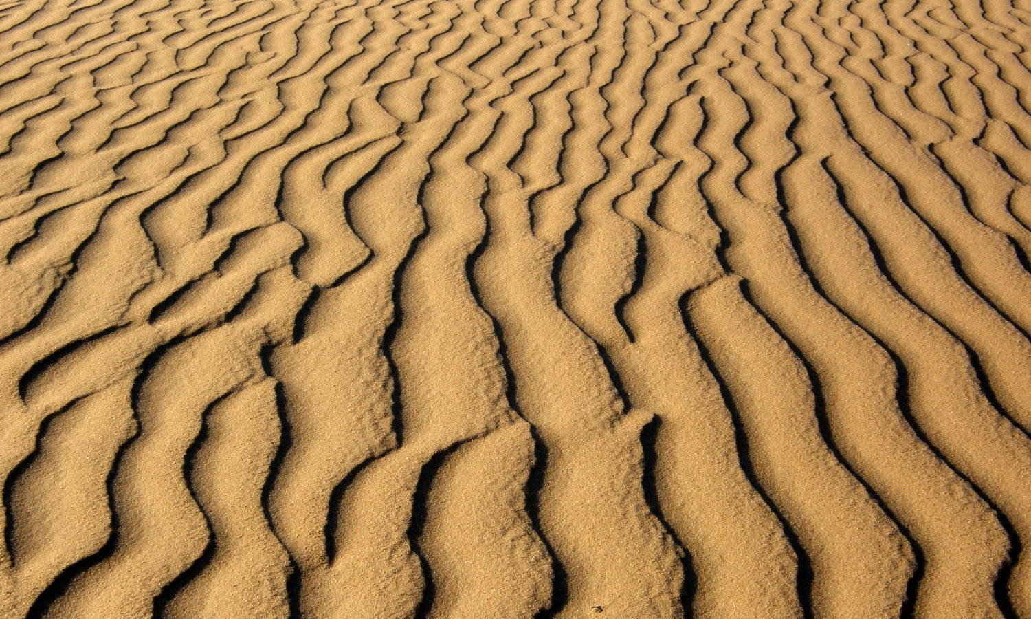 Lines in the Sand, Sign up to learn English or German online via Skype